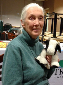 Jane Goodall takes a breather with her cow friend after speaking at Thompson Rivers University Monday night.