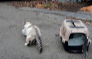 Feral cat runs away