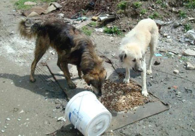 Two street dogs from Turkey find a feeding station. New legislation is aimed at preventing them from being harmed.