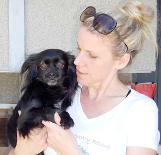 Sweetum the dog is seeking adoption at a recent fundraiser by Pommy Country Rescue.