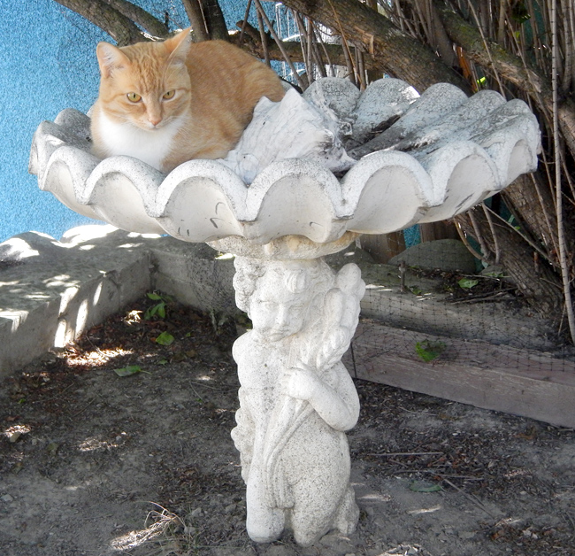 Lucy the cat sits in a birdbath waiting for her next victim.